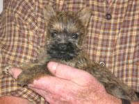 Cairn Terriers Testimonial